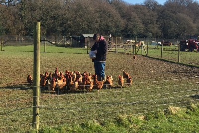 Feeding the chickens at Holtwood Community Farm