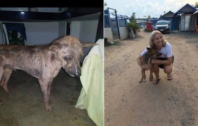 Before and after picture of a rescue dog with Laura Davison