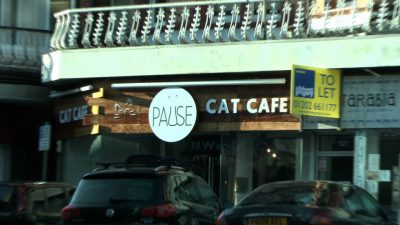 A photo of Pause Cat Café banner