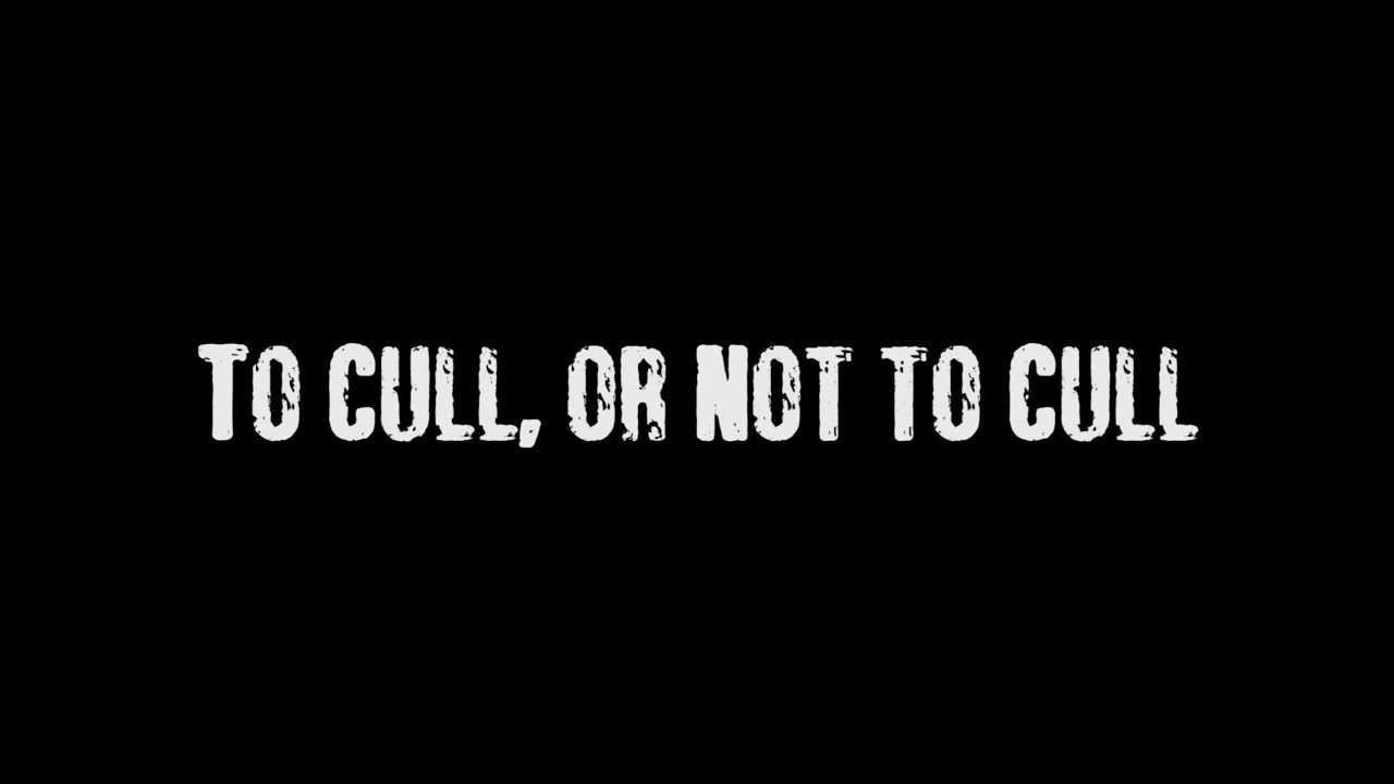 to cull or not cull