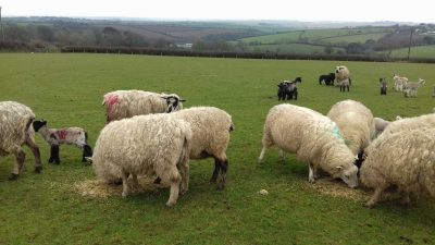 Recent 'atrocious' weather killing lambs, say farmers