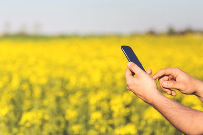 smartphone in field